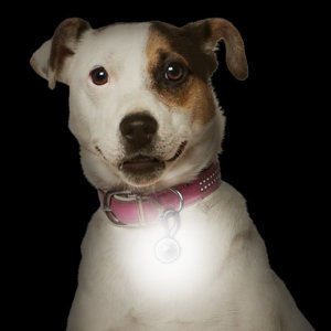 Keep your pet safe and visible with the Nite- Ize PetLit LED Collar Light. Available in the five fun designs and made of durable plastic, this bright LED light is easy to attach and activate.