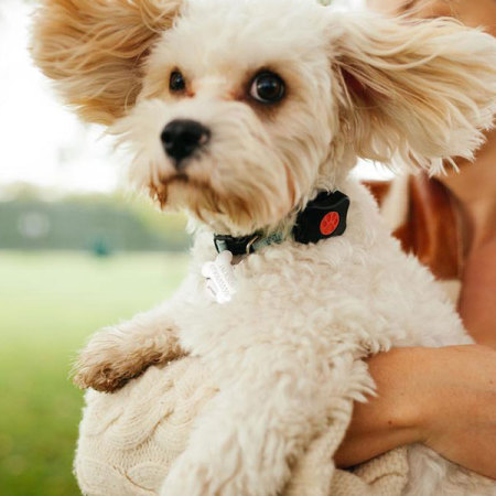 pitpat wearable activity monitor for dogs have worry