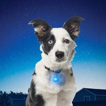 Nite Ize SpotLit Flash or Glow Multicolour LED Dog Collar Light