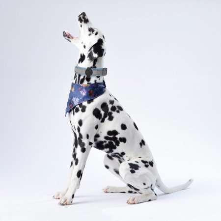 Olixar Nylon Adjustable Pet Collar With Apple AirTags Clip - Grey