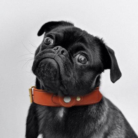 Olixar Apple AirTags Genuine Leather Small Dog Collar - Brown