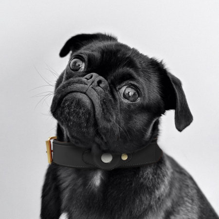 Olixar Genuine Leather Apple AirTags Dog Collar - Small - Black