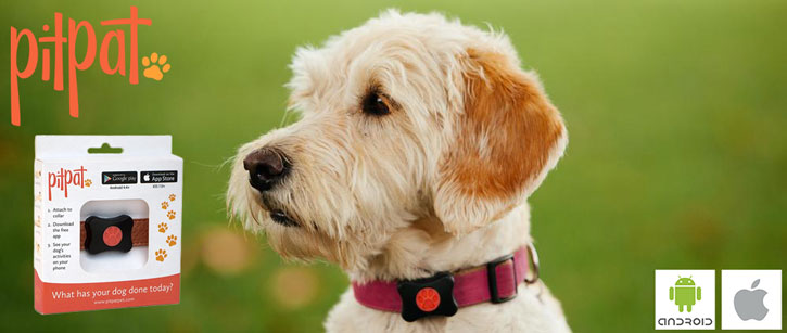 PitPat Wearable Activity Monitor for Dogs